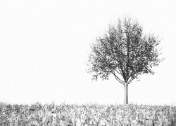 zwartwit 3.jpg