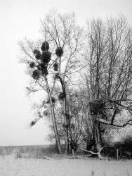 zwartwit 2.jpg